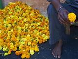 Marigolds, Flower Market, Madurai, Tamil Nadu, India, Asia Photographic Print by  Tuul