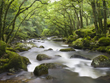 Rocky River Plym Flowing Through Dewerstone Wood in Dartmoor National Park, Devon, England, UK Photographie par Adam Burton