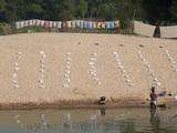 Dhobi Wallah Washing Laundry in River, Raghurajpur, Orissa, India Photographic Print by Annie Owen