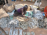 Desia Kondh Tribal Market Stall, Man Selling Sun Dried River Fish, Near Rayagada, Orissa, Inda Photographic Print by Annie Owen