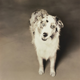 Dog Looking for a Home Photographic Print by Theo Westenberger