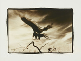 Vulture in Flight San Bernardino CA Photographic Print by Theo Westenberger
