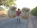 Man Carrying Bundles of Rice Straw Along Rural Road Near Rayagada, Orissa, India Photographic Print by Annie Owen