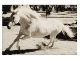 Running Horse Photographie par Theo Westenberger