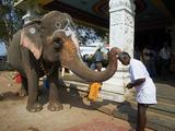 Benediction of Elephant, Sri Jambukeshwara Temple, Tiruchirappalli (Trichy), Tamil Nadu, Inda Photographic Print by  Tuul