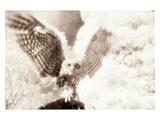 Owl Ascending Fotoprint van Theo Westenberger