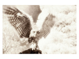 Owl Ascending Photographic Print by Theo Westenberger