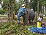 Captive Asiatic Elephants (Elephas Maximus Maximus), Victoria Park, Colombo, Sri Lanka Photographic Print by Peter Barritt