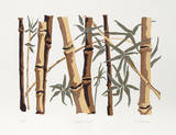 Bamboo Forest Serigraph by Phyllis Sussman