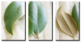 Leaves and Muslin Triptych Art