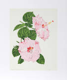 Hibiscus Collectable Print by Marion Sheehan