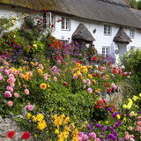 Flower Fronted Thatched Cottage, Devon, England, United Kingdom, Europe Photographic Print by Stuart Black