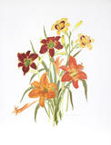 Day Lilies Collectable Print by Marion Sheehan