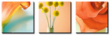 Tropical Flowers Triptych Poster