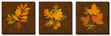 Fall Leaves Triptych Poster
