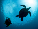 Hawksbill Turtle (Eretmochelys Imbricata) and Diver, Sulawesi, Indonesia, Southeast Asia, Asia Photographic Print by Lisa Collins