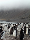 Chinstrap Penguins on the Shore, Hannah Point, Antarctica, Polar Regions Photographic Print by Ethel Davies