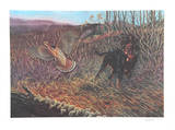Hunting Dog Collectable Print by Bill Elliot