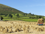 Oat Stooks, Knockshee, Mourne Mountains, County Down, Ulster, Northern Ireland, UK, Europe Photographic Print by Jeremy Lightfoot