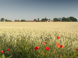 Common Poppy (Papaver Rhoeas) at Wheat Field and Ctenice Castle, Ctenice, Czech Republic Photographic Print by Richard Nebesky
