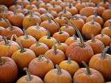 Large Number of Pumpkins for Sale on a Farm in St. Joseph, Missouri, USA, North America Photographic Print by Simon Montgomery