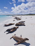 Galapagos Sea Lions (Zalophus Wollebaeki), Galapagos Islands, UNESCO World Heritage Site, Ecuador Photographic Print by Michael Nolan