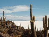 Cacti with Salt Desert in Background, Salar Uyuni, Southwestern Bolivia Photographic Print by Phil Clarke-Hill
