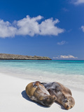 Galapagos Sea Lions (Zalophus Wollebaeki), Galapagos Islands, UNESCO World Heritage Site, Ecuador Fotografie-Druck von Michael Nolan