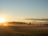 Sunrise on Field of Green Grass with Douglas Firs and Mount Rainier, Vashon Island, Washington, USA Photographic Print by Aaron McCoy