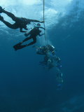 Divers Following a Current Lile, Roatan, Bay Islands, Honduras, Caribbean, Central America Photographic Print by Antonio Busiello