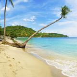 Overhanging Palm Tree, Nippah Beach, Lombok, West Nusa Tenggara, Indonesia, Southeast Asia, Asia Photographic Print by Matthew Williams-Ellis