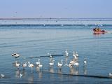 Greater Flamingos (Phoenicopterus Ruber Roseus), Walvis Bay, Erongo Region, Namibia, Africa Photographic Print by Nico Tondini