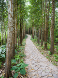 Path Through the Forest at My Son, UNESCO World Heritage Site, Vietnam, Indochina, Southeast Asia Photographic Print by Matthew Williams-Ellis