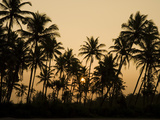 Palm Trees at Sunset, Goa, India, Asia Photographic Print by Stuart Black