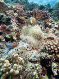 Reef Scene, Sulawesi, Indonesia, Southeast Asia, Asia Photographic Print by Lisa Collins