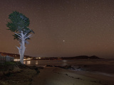 Monterey Bay with Tree and Night Sky with Stars, Monterey, California, USA, North America Photographic Print by Antonio Busiello