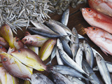 Fish at Market, Weligama, Southern Province, Sri Lanka, Asia Photographic Print by Ian Trower