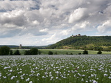 Zebrak and Tocnik Castles from across a Poppy Field, Tocnik, Stredocesko, Czech Republic, Europe Photographic Print by Richard Nebesky