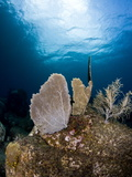 Reef Scene with Sea Fan, St. Lucia, West Indies, Caribbean, Central America Photographic Print by Lisa Collins