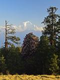 Rhododendron and Dhaulagiri Himal Seen from Poon Hill, Dhawalagiri (Dhaulagiri), Nepal Fotografisk tryk af Jochen Schlenker