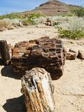 Close-Up of Fossilised Tree Trunks, Petrified Forest, Damaraland, Kunene Region, Namibia, Africa Photographic Print by Nico Tondini