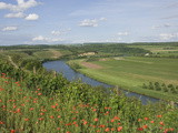 Poppies and Vineyards Along Border of Luxembourg and Germany, River Moselle (Mosel), Germany Photographic Print by James Emmerson