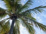 Coconut Tree, Low Angle View, Providenciales, Turks and Caicos Islands, West Indies, Caribbean Photographic Print by Kim Walker