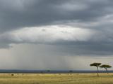 Masai Mara, Kenya, East Africa, Africa Photographic Print by Sergio Pitamitz