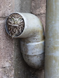 Little Owl (Athene Noctua) in Drainpipe, Captive, United Kingdom, Europe Photographic Print by Ann & Steve Toon