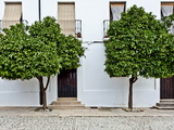 Orange Trees in Ronda Street, Ronda, Andalucia, Spain, Europe Photographic Print by Giles Bracher
