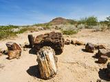 Petrified Forest, Fossilised Tree Trunks, Damaraland, Kunene Region, Namibia, Africa Photographic Print by Nico Tondini