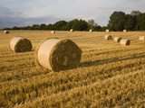Round Straw Bales in Field of Harvested Barley, Shottisham, Woodbridge, Suffolk, England, UK Photographic Print by Ian Murray