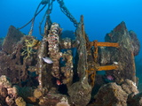 Gantry Gear on Deck of Wreck of Lesleen M, Sunk in 1985 Off Anse Cochon Bay, St Lucia Photographic Print by Lisa Collins