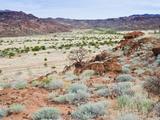 Twyfelfontein, UNESCO World Heritage Site, Damaraland, Kunene Region, Namibia, Africa Photographic Print by Nico Tondini